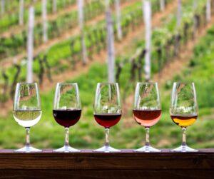 wine tasting Montenegro